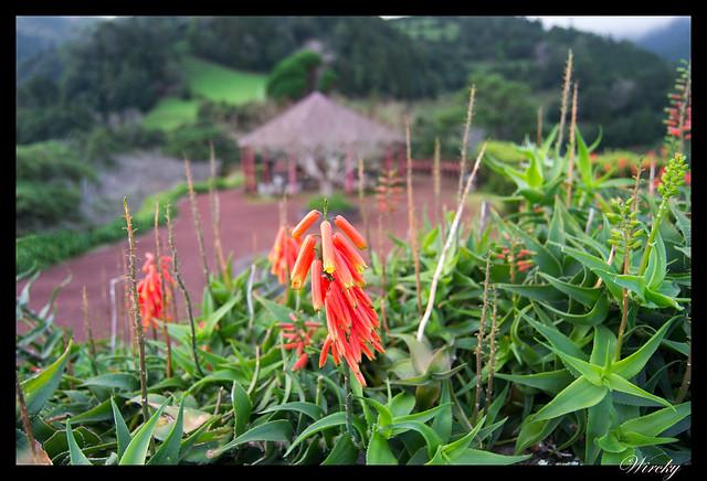Flores típicas