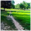 Paths of desire. Fernhill Park.