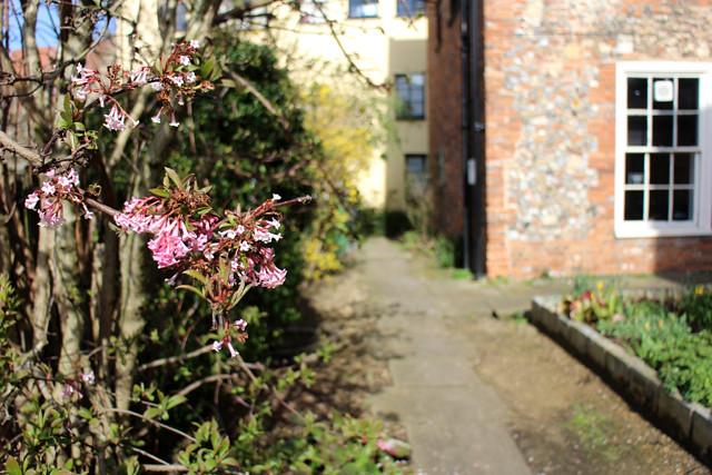 blossomhouse