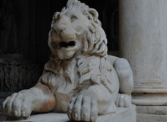 Stone Lion in Capitoline Museums
