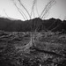 California Desert Photography