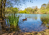 Jez in Creekmoor Ponds