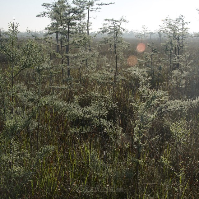 view 0005 Gator Hook Trail, Big Cypress National Preserve, Florida, USA