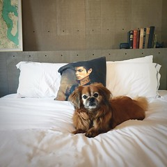 #youarenotalone when you stay at the @palladianhotel in #seattle. #michaeljackson joins you! @kimpton #dogfriendly
