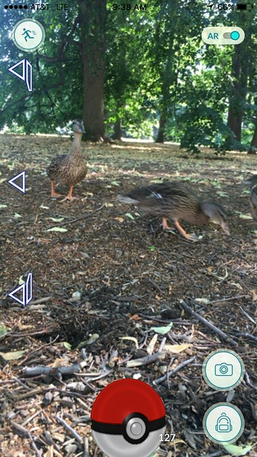 Phone screen shot of the augmented reality pokemon go screen. An animated pokeball is at the bottom of the screen and two mallard Ducks walk in the center of the image.
