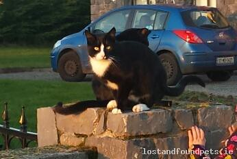 Thu, Apr 9th, 2015 Lost Male Cat - Unnamed Road, Galway