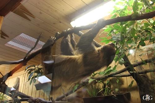 Zoo Bratislava 18.04.20155