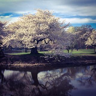 Daydreaming in Nomehegan Park, 4.25.15