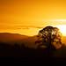 'Scottish Serengeti' by Steve Pigott