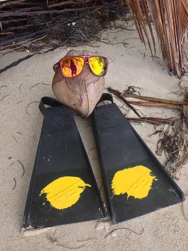 Free coconuts! Playa Estrella, Isla Colon, Bocas del Toro