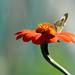 """""""Le bonheur est comme un papillon : il vole sans jamais regarder en arrière."""" by mamnic47 - Over 6 millions views.Thks!"""