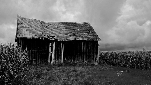(The Old Barn) Late Summer Edition