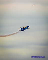 BLUE ANGEL FIVE PULLING UP WITH VAPES, AS A SEAGULL DUCKS