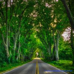 100 Days of Summer #75 - Oak Tunnel