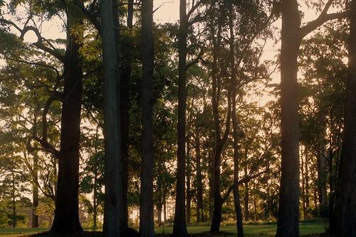 autumn trees australia nsw parkland northernrivers tullera tullerapark