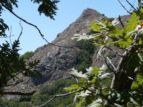 Cumbres y bosques