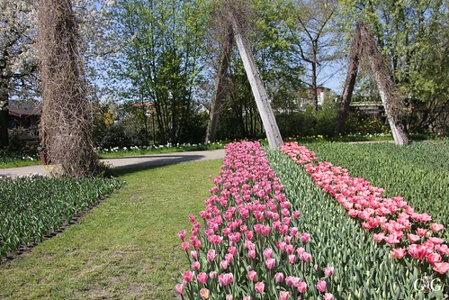 Tulipan im Britzer Garten 23.04.201520
