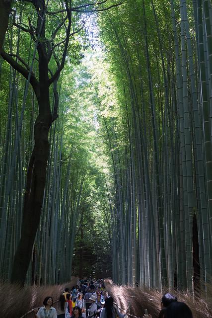 Sagano_BambooForest_06