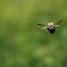 Fly away by Tammy Schild