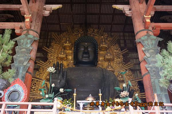 日本奈良公園東大寺26