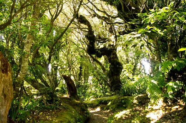 Mt Taranaki path to Dawson Falls 23 1 15 K54862