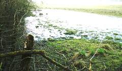 Crue de la Saône