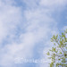 spring sky and tree by Dani_Girl