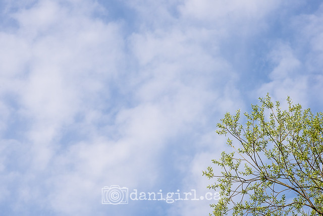 spring sky and tree