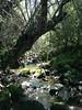 Ruisseau à Begoub (Yakouren)