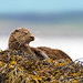 Otter by Chas Moonie-Wild Photography