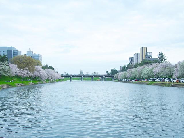150404_Sakura_and_ 2