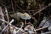 Mushroom World 3