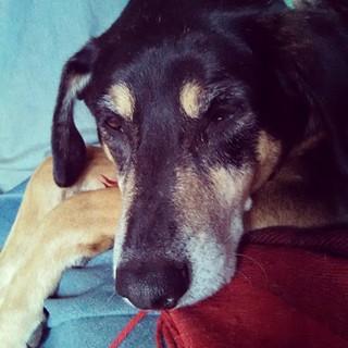 Rainy Friday blahs... #dogstagram #rescuedog #coonhoundmix #muttstagram #instadog
