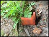THE RED RUBBER BOOT