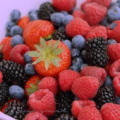 blackberry, tayberry, berry, frutti di bosco, produce, loganberry, fruit, food, raspberry, boysenberry,