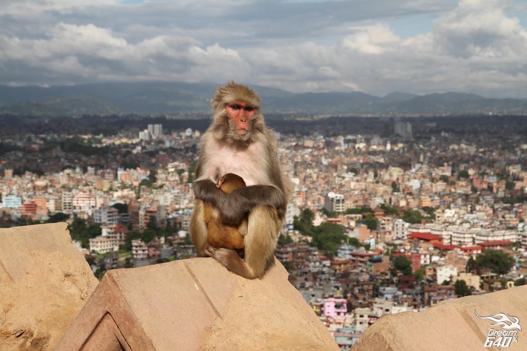 尼泊爾加德滿都-Nepal Kasthamandap66