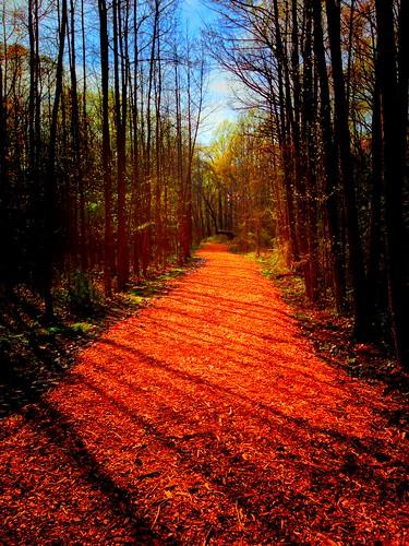 nature training outdoors woods exercise path running trail jogging beautifulday trailrunning washingtonlakepark