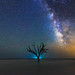 Edisto Island Milky Way by Robert Loe