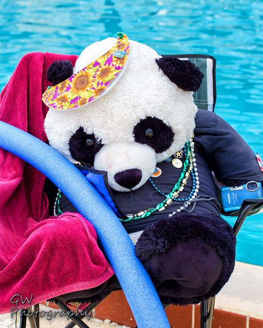 Pool Party Bear