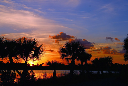 blue trees sunset sky florida palm palmtree su fortpierce bluesly georgelestrangepreserve