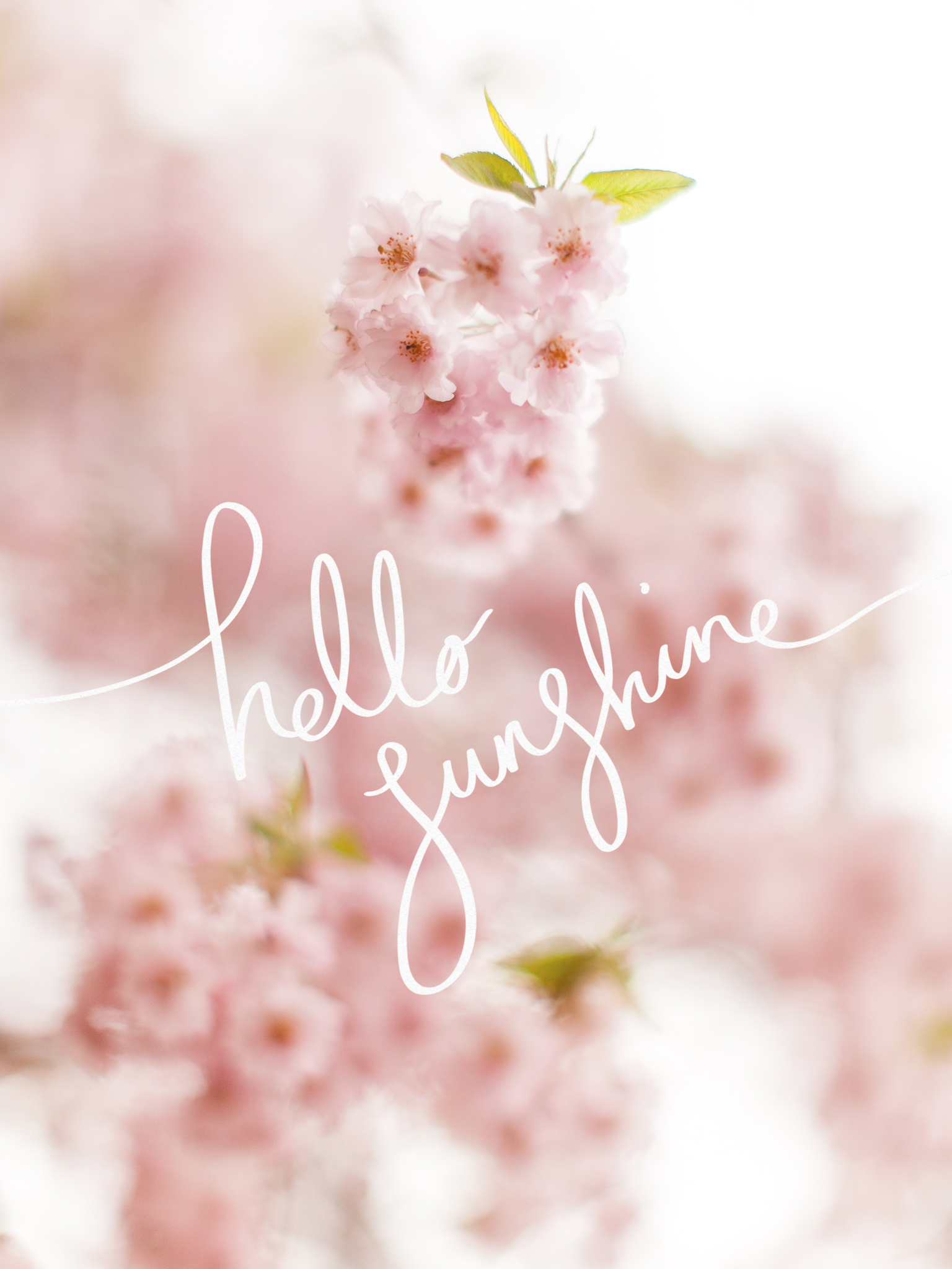 Hello Sunshine A Free Cherry Blossom Desktop Wallpaper