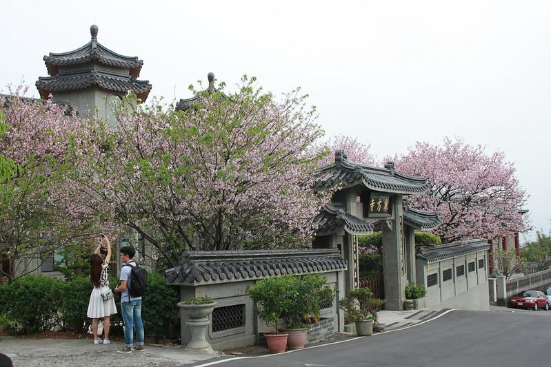 17度C在地景點春季推薦-東方室-櫻花 (14)