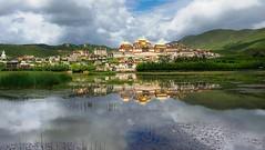 Gyeltang Sungtseling Gonpa, Tibet 2015