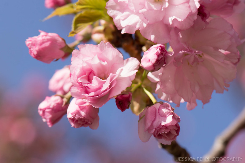 Pink Flowers on Trees Macro Photography