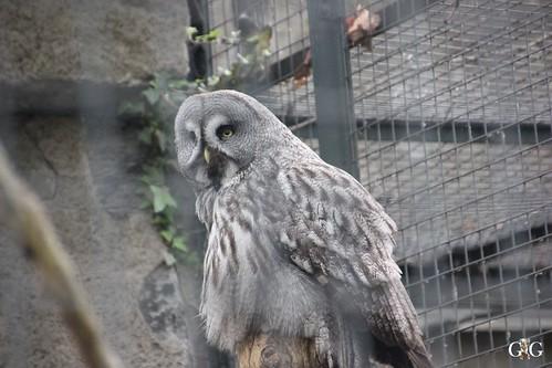 Zoo Berlin 26.04.201578