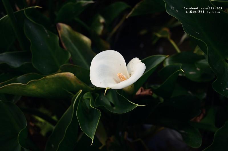 陽海 (12)