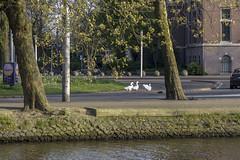 NEDERLAND - Amsterdam 051