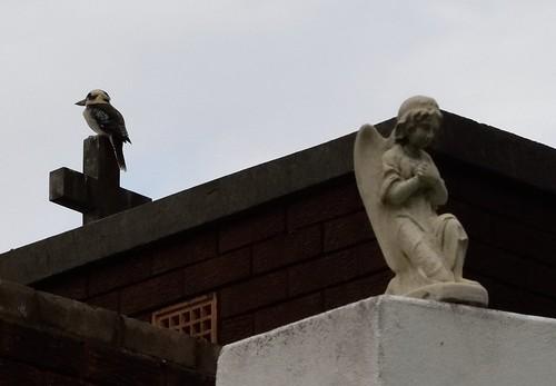 The Kookaburra & the Angel