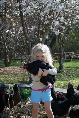 Audrey, chickens, magnolias