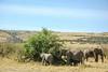 Elefantes en la sombra